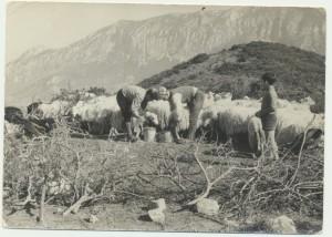 Antioco, Giovanni e Piero Cordone: archivio popolare fotografico