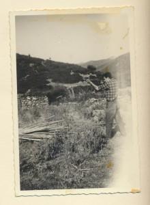 scena di caccia: archivio popolare fotografico
